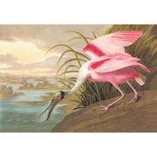 Roseate Spoonbill by John James Audubon Graphic Art on Canvas