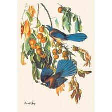 Scrub Jay by John James Audubon Graphic Art on Canvas