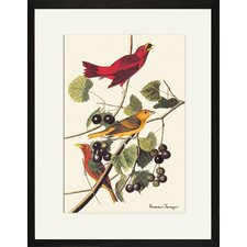 Summer Tanager Framed and Matted Print
