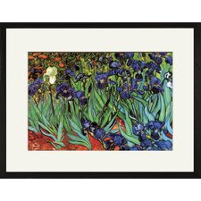 <strong>Buyenlarge</strong> Irises Framed and Matted Print