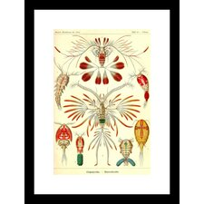 Crustaceans Framed and Matted Print