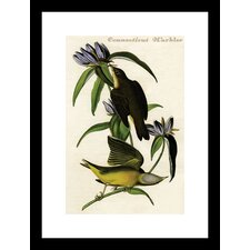 Connecticut Warbler by R.Havell Framed Painting Print