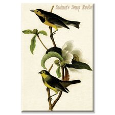 Bachman's Swmap Warbler Graphic Art on Canvas