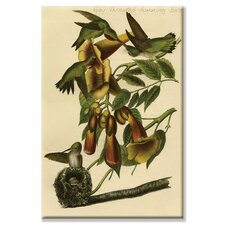 <strong>Buyenlarge</strong> Ruby Throated Humming Bird Canvas Wall Art