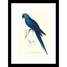 <strong>Buyenlarge</strong> Blue and Yellow Macaw Ara Ararauna Framed and Matted Print