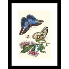 <strong>Buyenlarge</strong> Cardinal's Guard Butterfly with Idomeneus Giant Owl Butterfly Framed and Matted Print