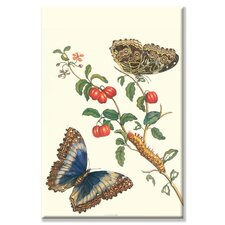 <strong>Buyenlarge</strong> Barbados Cherry Tree with a Moth Canvas Wall Art
