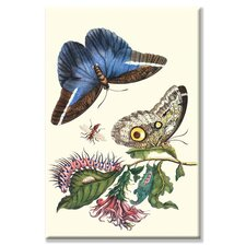 <strong>Buyenlarge</strong> Cardinal's Guard Butterfly with Idomeneus Giant Owl Butterfly Canvas Wall Art