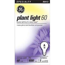 60W Blue 120-Volt Light Bulb