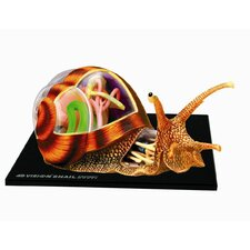 4D Vision Snail Anatomy Model