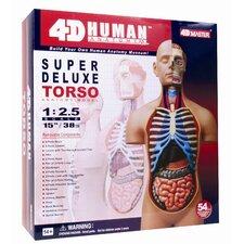 """4D Human Anatomy - Deluxe Torso Model """"15"""""""