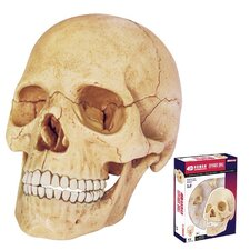 17 Piece Human Anatomy Exploded Skull Set
