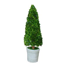 "Boxwood 30"" Cone Topiary"