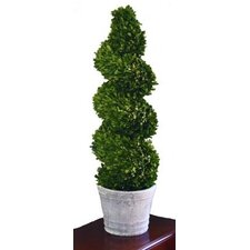 <strong>Mills Floral</strong> Boxwood Spiral Topiary in Pot