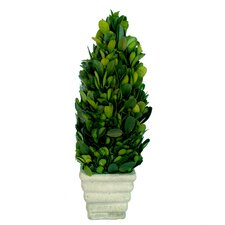 "Boxwood 9.25"" Small Cone Topiary"
