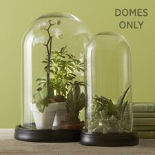 Curiosity Shop Dome (Set of 2)
