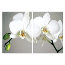 Pure Love White Orchids Modern 2 Piece Photographic Print