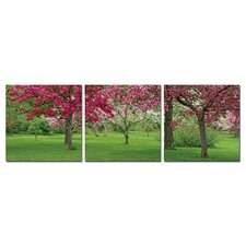 Cherry Blossoms Modern 3 Piece Photographic Print
