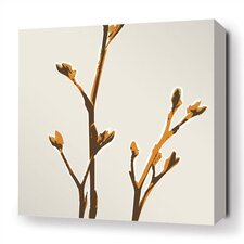 Botanicals Axis Stretched Graphic Art on Canvas in Sunshine