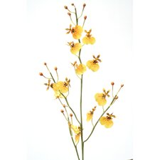 DIY Flower Oncidium Orchid (Set of 12)