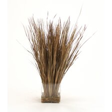 Dried Grass in Rectangular Glass Decorative Vase