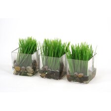 Silk Kelly Grass in Glass Vase (Set of 3)