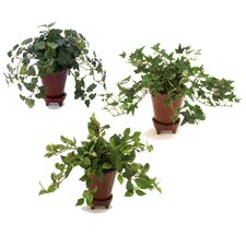 Silk Arrangement Floor Plant in Pot (Set of 6)