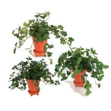 Silk Mini Arrangement Floor Plant in Pot (Set of 6)