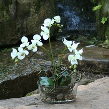 Silk Phalaenopsis Orchid in Glass Bowl