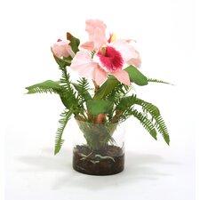 Waterlook Sonia Cattleya Orchids with Fern in Cylinder Vase