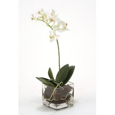 <strong>Distinctive Designs</strong> Waterlook Mini Phalaenopsis Orchid in Vase (Set of 2)