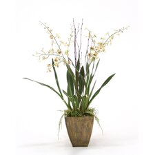 Silk Dancing Orchid with Twigs in Planter
