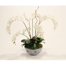 <strong>Distinctive Designs</strong> Silk Phaleanopsis Garden in Bowl