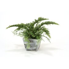 Silk Australian Fern Bush in Planter