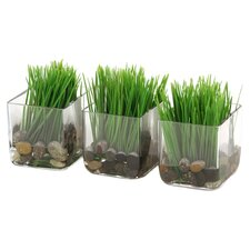 Silk Kelly Grass in Square Glass Decorative Vase (Set of 3)
