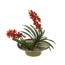 Silk Vanda Orchid Plant in Glazed Bowl