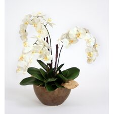 Silk Orchid Plant with Bark and Mushrooms in Bowl