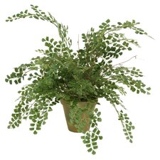 "Silk Maidenhair Fern in 6"" Garden Pot"