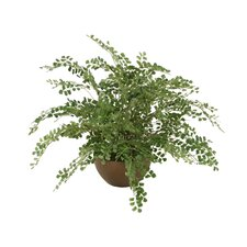 "22"" Silk Maidenhair Fern in Earthenware Bowl"