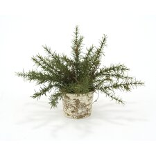 <strong>Distinctive Designs</strong> Silk Small Rosemary Floor Plant in Pot