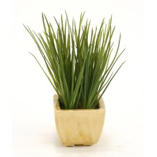 Faux Succulent Grass in Square Planter (Set of 2)