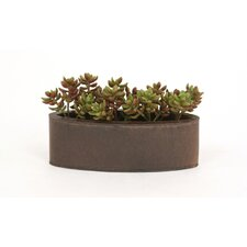 Faux Succulents in an Oval Metal Planter