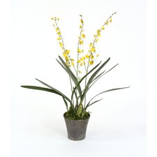 Silk Oncidium Orchid Plant in Crystal Pot