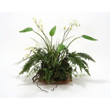 Silk Woodland Fern, Ivy and Vines with Orchid Accents on Coconut Wood Tray