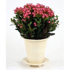 Silk Fuchsia Kalanchoes in Speckled Pot with Saucer