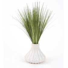 Basil Grass in Round Tapered Ceramic Decorative Vase