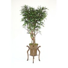 "84"" Ruscus (Smilax) Tree in Ram's Head Planter"