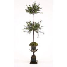 Double Silk Rosemary Topiary in Trophy Urn