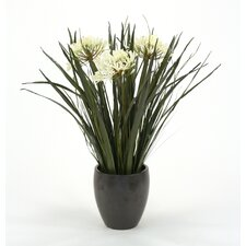 Artificial Agapanthus with Blades and Grasses in Plum Pot