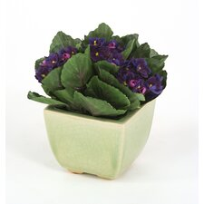 Silk Violets in Square Crackle Planter